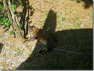Mister in the Shade 1