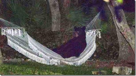 Yogi Bear in Daytona