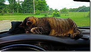 Mister on Truck Dashboard